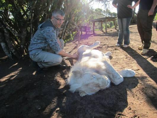 חורי באפריקה. בשמורת אריות, שמשום מה לא הזכרנו בכתבה
